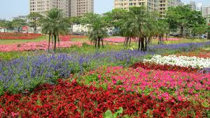 flowers garden city flower garden tree colorful flowers city flower wallpapers photos