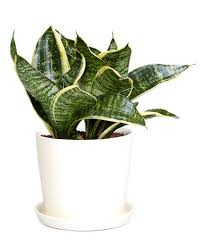 plant for office 7 office plants you won t kill real simple