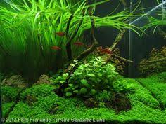 aquarium design exle the most awesome images on the internet aquariums fish tanks and fish