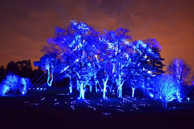 tree light show illumination at morton arboretum