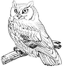 bird coloring pages for toddlers owl coloring pages birds screech owl bird coloring page