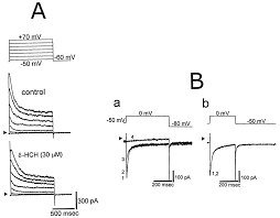 square root of 289 stimulatory effects of δ hexachlorocyclohexane on ca2 activated