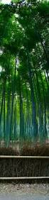 bamboo land nursery and parklands bamboo forest nature pinterest screens trees and forests