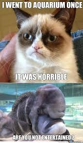 Grouchy Cat Meme - 39 best grumpy cat memes images on pinterest funny kitties funny