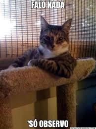 Gato Meme - falo nada s祿 observo o gato mais interessante do mundo
