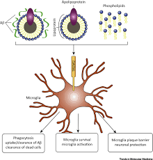 trem2 microglia and neurodegenerative diseases trends in