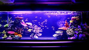 artificial coral reef aquarium update