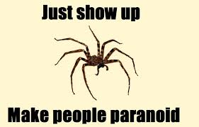 I Saw A Spider Meme - spider meme sharenator