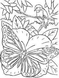 index of albums photos papillon coloriage