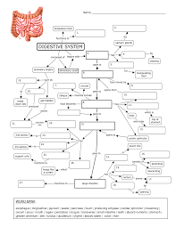 http www docstoc com docs 89897093 digestion concept map the