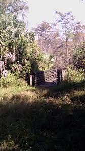 frenchman u0027s forest natural area south florida finds