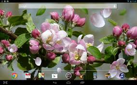 google images flower spring flower live wallpaper android apps on google play