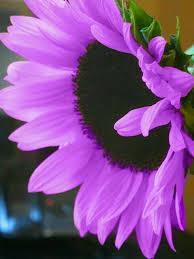 imagenes flores bellisimas flores bellas pretty in pink purple pinterest flor bellisima