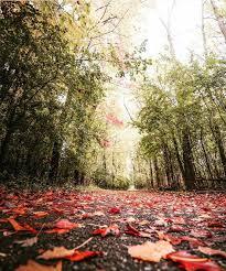 halloween city jackson mi 100 days of fall mount pleasant wow