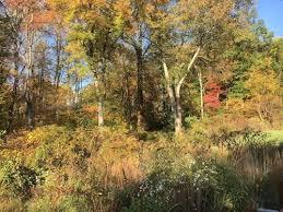 crow u0027s nest fall color alert natural lands