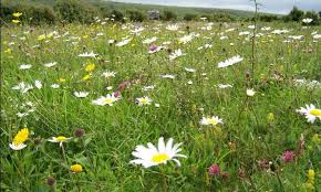 native irish plants butterfly conservation ireland u2013 irish butterfly website