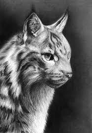 39 best bobcat tat ideas images on pinterest drawings friends