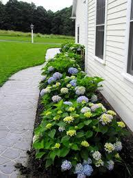 Summer Flower Garden Ideas - best 25 endless summer hydrangea ideas on pinterest pruning
