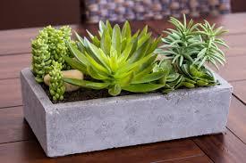mercury row succulent floor plant in concrete planter u0026 reviews