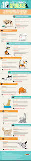 cat lover u0027s guide to common feline diseases infographic