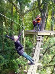 Treetop Canopy Tours by Ziplining Rotorua New Zealand Discovering New Skies