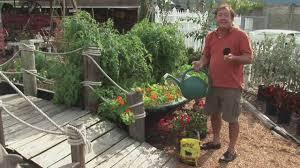 best gardening tips for beginners vegetable gardens for