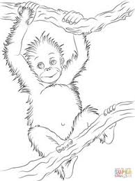 cute baby orangutan coloring rainforest animals