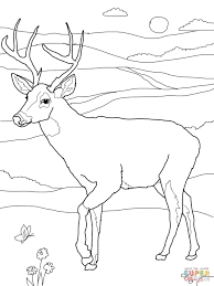 deer coloring page white tail deer coloring page free printable