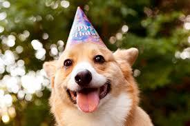 Corgi Birthday Meme - happy queen s birthday meowoof
