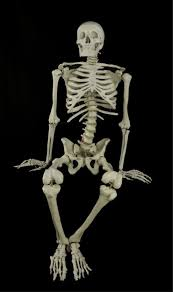 mutant dead skeleton dog bone scary haunted house halloween prop
