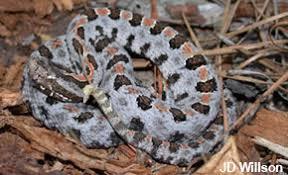 How To Avoid Snakes In Backyard Snake Safety Srel Herpetology