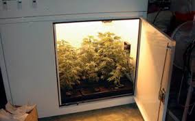 how to build a marijuana grow box greenman u0027s page