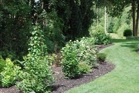 Garden Shrubs Ideas Skillful Design Garden Shrubs Shrub Maitland Of Gardening