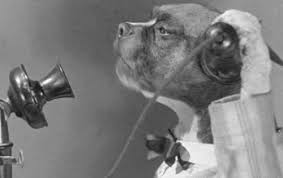 boxer dog howling why does my dog do that a closer look at canine quirks certapet