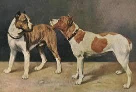 l american pitbull terrier a p b t spartan dogs american pit bull terrier