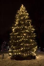 large trees lights decoration
