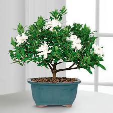 best plants for bedroom the best 5 bedroom plants to get rid of stress and sleep better