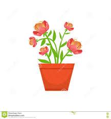 home bushy red flower in the flowerpot flower shop decorative