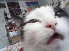 Tired Cat Meme - derp meme weknowmemes