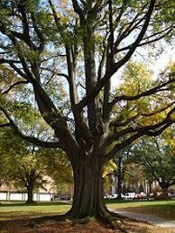atlanta tree canopy