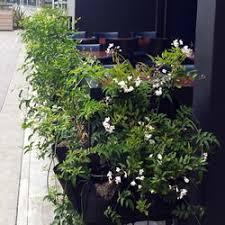 indoor planting area indoor planting 15 photos indoor landscaping century