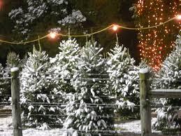 christmas prescott az christmas treeotschristmasots