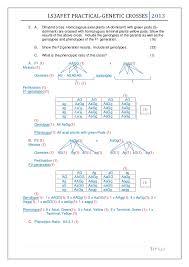 Dihybrid Crosses Worksheet Genetic Crosses Worksheet