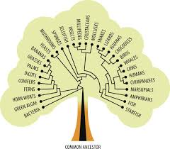 a lucid explanation about the meaning of tree of