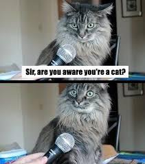 Suprised Meme - surprised cat memes lol