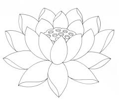 lotus flower drawing outline lotus flower coloring pages printable