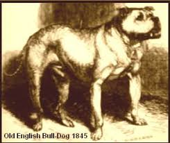american pitbull terrier jeep bloodline some more history on the apbt game dog history for the true