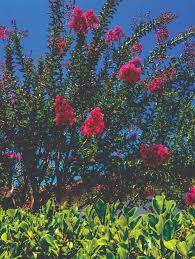post winter garden prep u2014 spring klein magazine