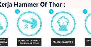 menguak cara kerja hammer of thor asli italy obat kuat herbal