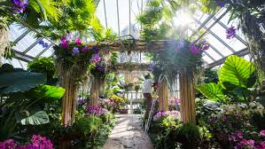 Botanical Garden Orchid Show The Best Way To Escape The Chicago Winter